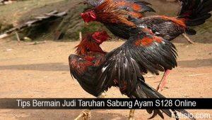 Tips Bermain Judi Taruhan Sabung Ayam S128 Online