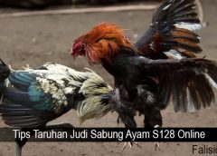 Tips Taruhan Judi Sabung Ayam S128 Online