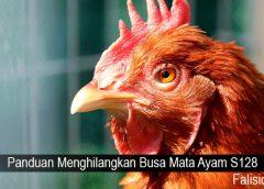 Panduan Menghilangkan Busa Mata Ayam S128
